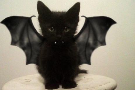 Gato disfrazado de vampiro