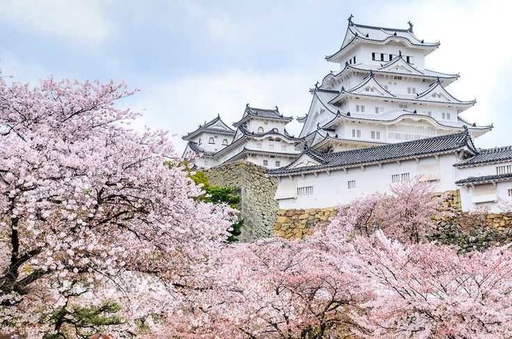 The Everything Guide To Cherry Blossom Season In Japan