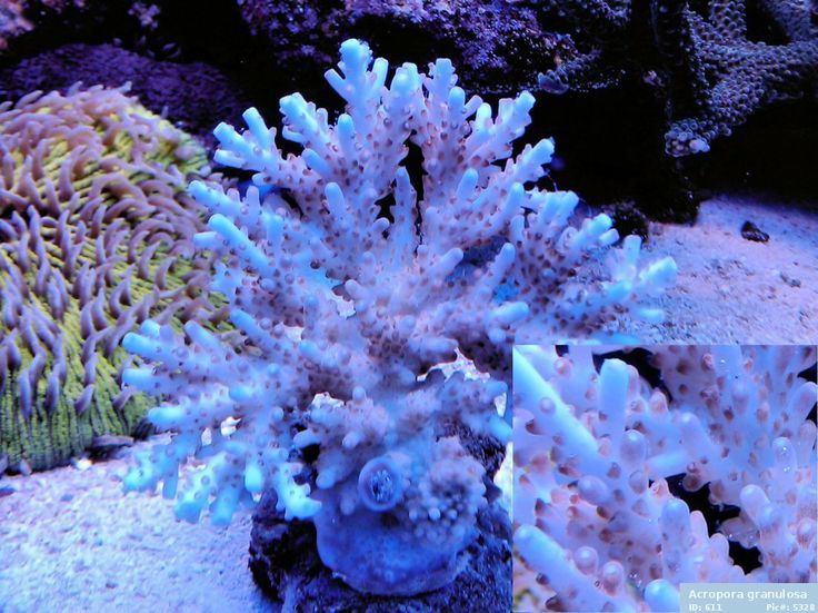 17 best images about saltwater fish on pinterest names for Saltwater fish names