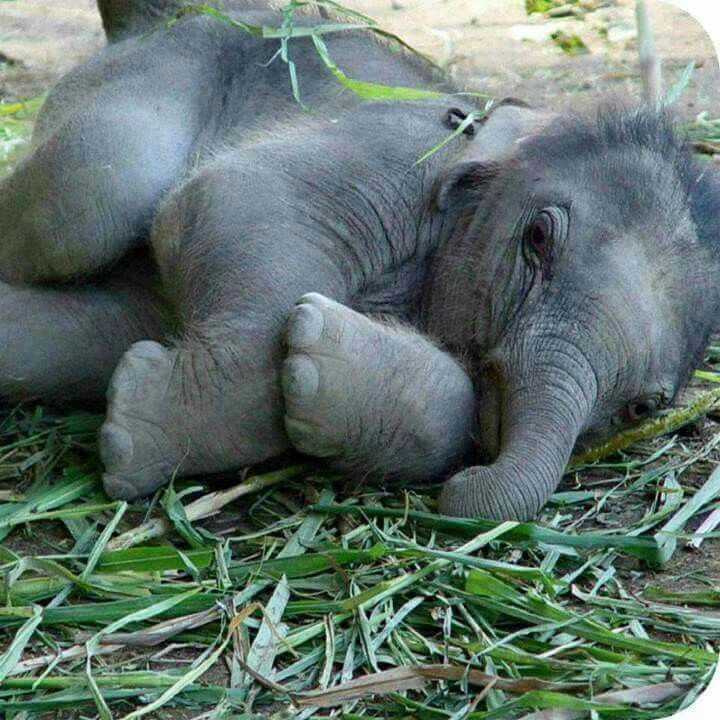 Sweet baby elephant! This is the face I make when I want something