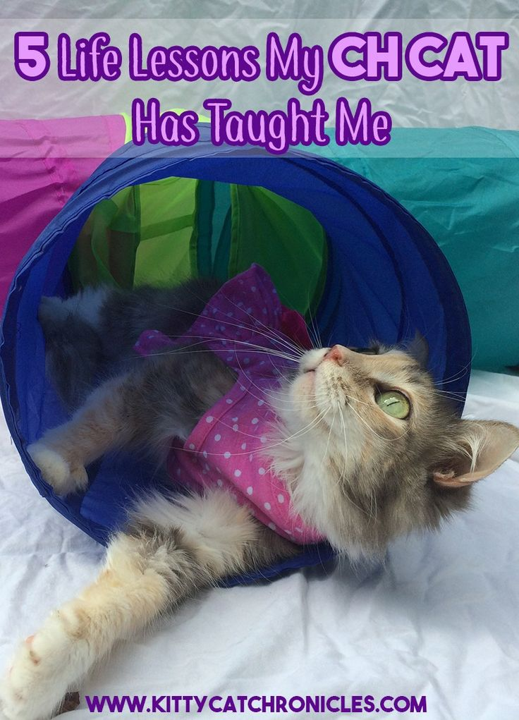5 Life Lessons My CH Cat Has Taught Me