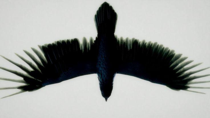 Fat Freddy's Drop - Blackbird (Official Video)
