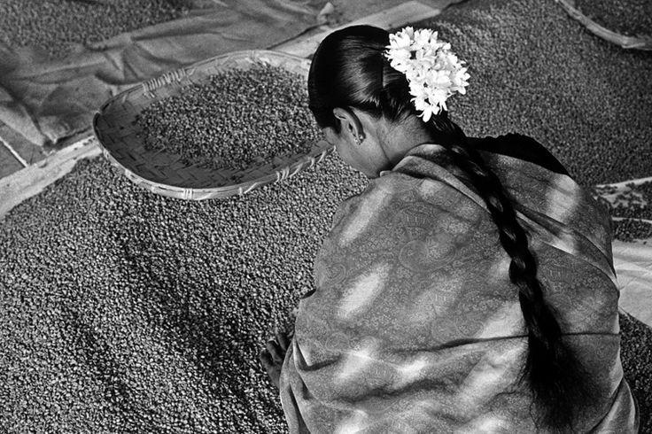 Coffee worker in India by Sebastiao Salgado, genius photographer