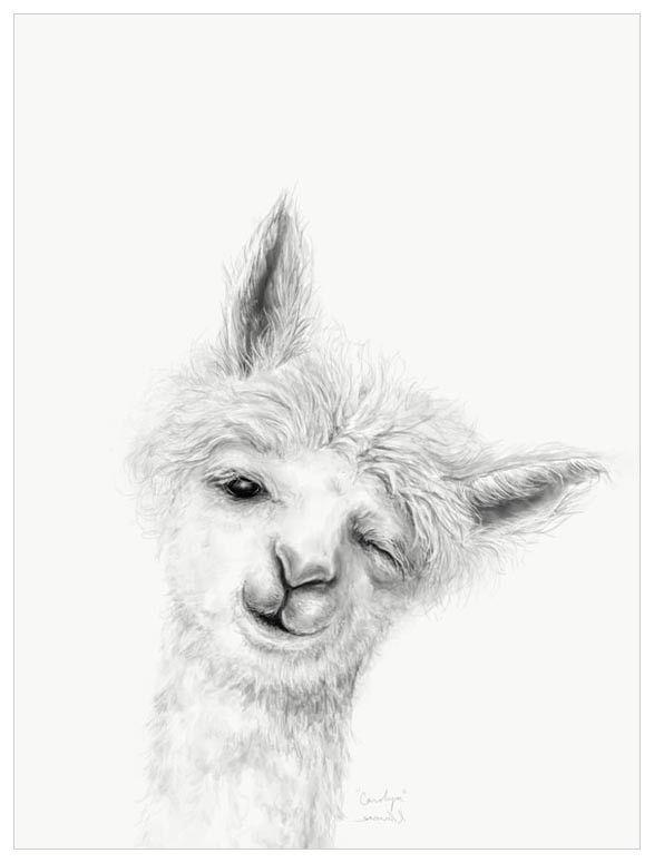 Llama Draw You A Portrait Carolyn Wall Art Llama Drawing