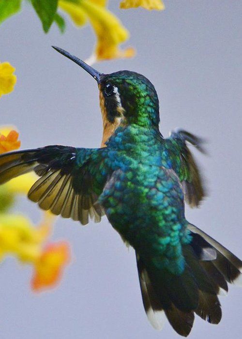 Best Hummingbirds Make Me Happy Images On Pinterest - Photographer captures amazing close up photos of hummingbirds iridescent feathers