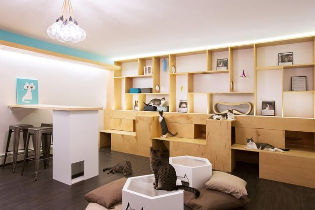 How To Design The Purrfect Cat Cafe | Co.Design | business + design http://www.fastcodesign.com/3041673/how-to-design-the-purrfect-cat-cafe