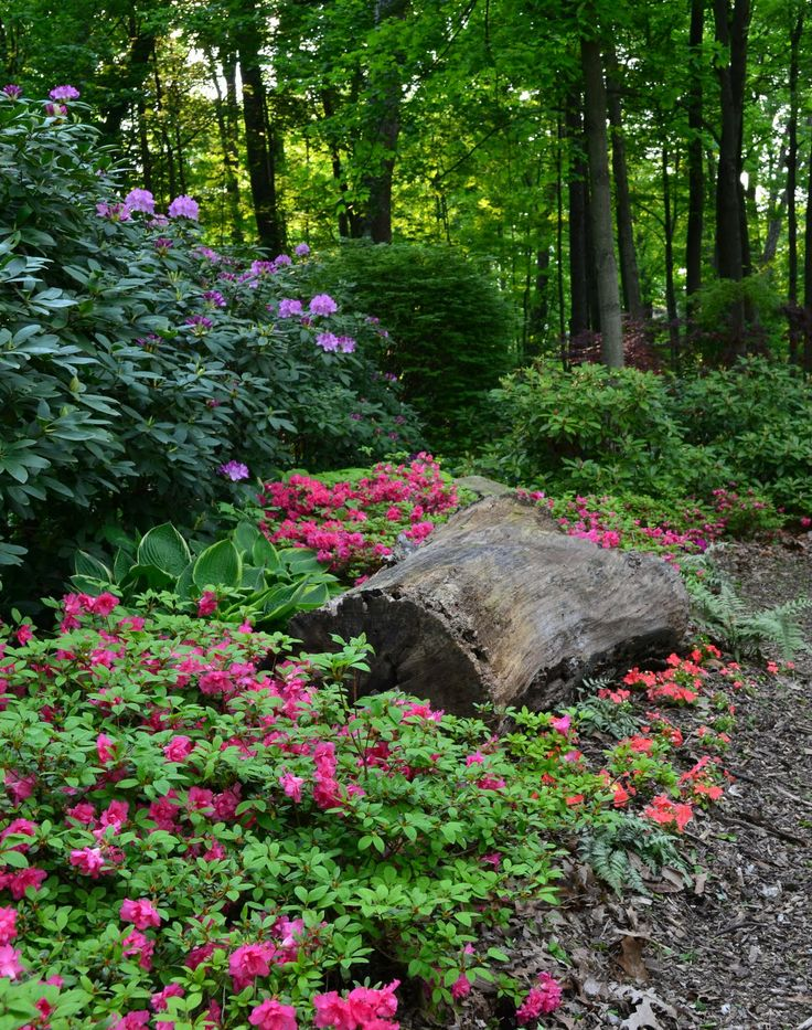garden in woods - Google Search