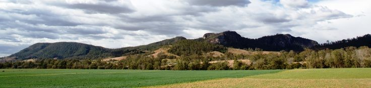 The beautiful Bucketts Mountain backdrop for your morning cuppa!!! https://www.facebook.com/pages/MANSFIELD-COTTAGE-BARRINGTON-Barrington-Tops-Holiday-Accommodation/341811962165 Email - jill.perram@bigpond.com  Ph 02 65 547 780 M 0431734352 family holiday country farm river swimming fishing canoeing cottage barrington tops national park gloucester tops waterfalls horse riding abseiling rock climbing