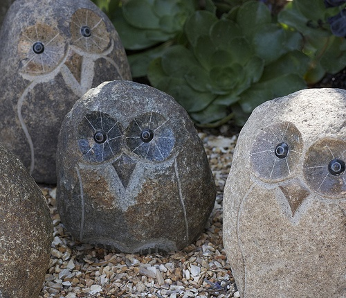 17 Best 1000 images about Owls in the garden on Pinterest Gardens