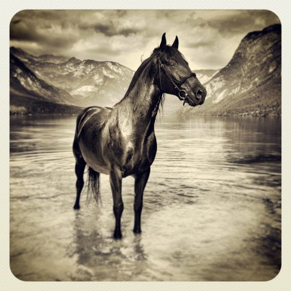 Original Miniature Photography Chilli In The Lake
