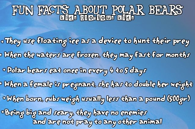 Fun facts about polar bears, the kings of the arctic circle #facts #funfacts #nature #animals #naturefacts #animalfacts #bears #polarbears