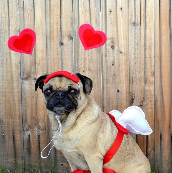 Valentine's Day Love package - CUPID WINGS and HEART hat fits all size dogs or cats. $32.00, via Etsy.