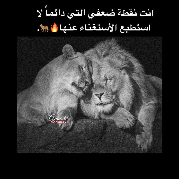 انت نقطة ضعفي Cute Love Couple Islamic Posters Cute Girl Photo