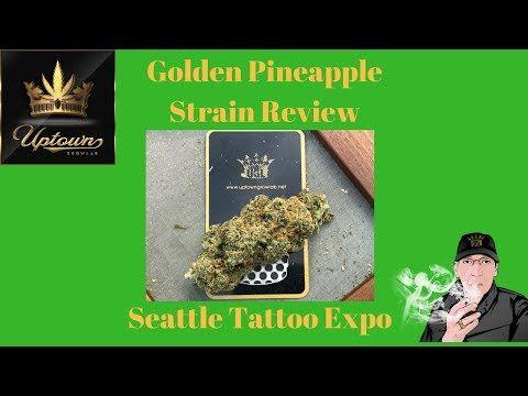 Golden Pineapple Strain Review; Seattle Tattoo Expo & more -  https://i2.ytimg.com/vi/Qf9H429RAxU/hqdefault.jpg - http://tokenbudz.com/2017/08/24/golden-pineapple-strain-review-seattle-tattoo-expo-more/