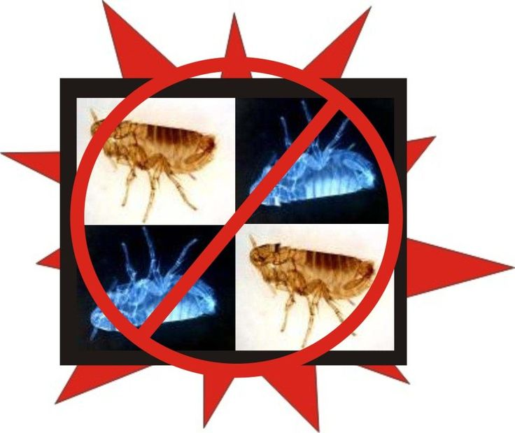 Picture of Control Fleas Naturally with Common Household Items