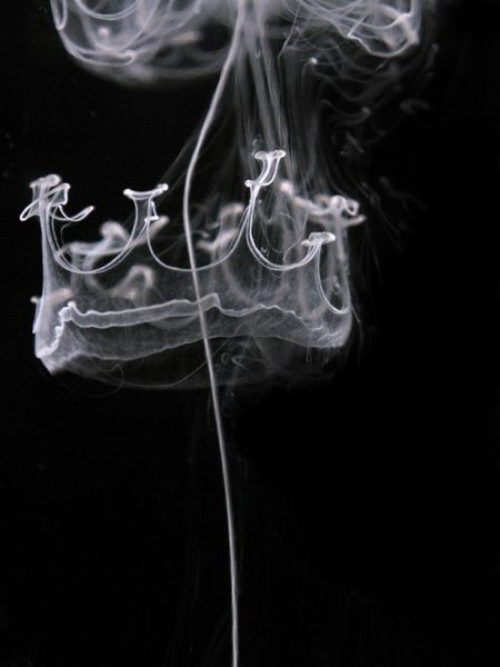 "Maximilian Jaenicke Crown of Smoke   How'd he do it? ""Milk, water, a big jar, Canon Powershot A95 + macro converter lens, 2x 500 W halogen lamps, black board and PS, of course. Milk was dripped into water with a pipette. While the milk was   decending in the water, a series of shots were taken."""