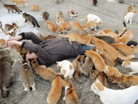"Cats on the ""Cat Island"" in Japan, where more cats live than humans! #catisland"
