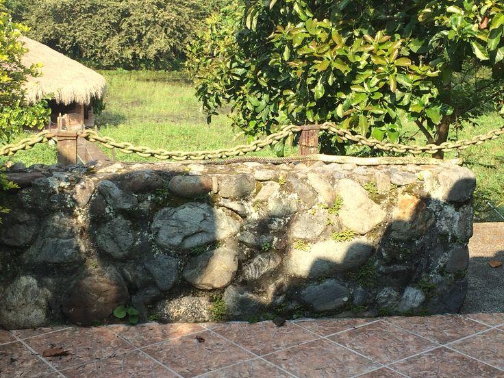 Phrynonax shropshirei , sobre el muro de piedra( aprox 2 metros de largo)