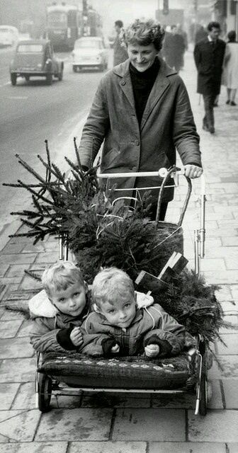 Taking home the Christmas tree 1950 s.