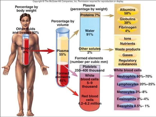 blood components - Google Search