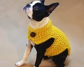 love the yellow colour against the black and white fur