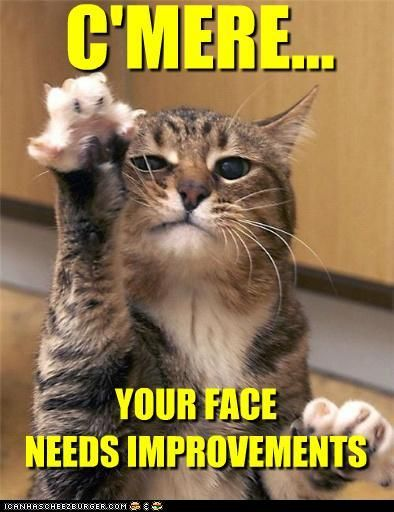this is something my cat thinks about doing to most everyone