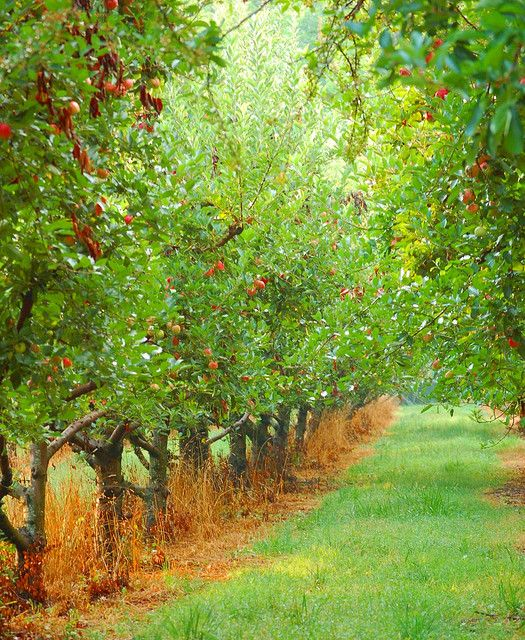 'Twould love an orchard. Imagine spreading a blanket between the trees and having a picnic - or just reading a book. :)  This brings me back to my childhood