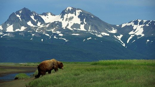 Travel tip: Destinations worth checking out in 2015: 4. Alaska #bear  #usa #nature #America #KILROY
