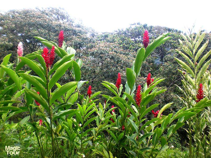 Minca, Sierra Nevada de Santa Marta beutifull flora. #travel #adventure #cultures #minca #river #beutiful #enjoy #landscapes