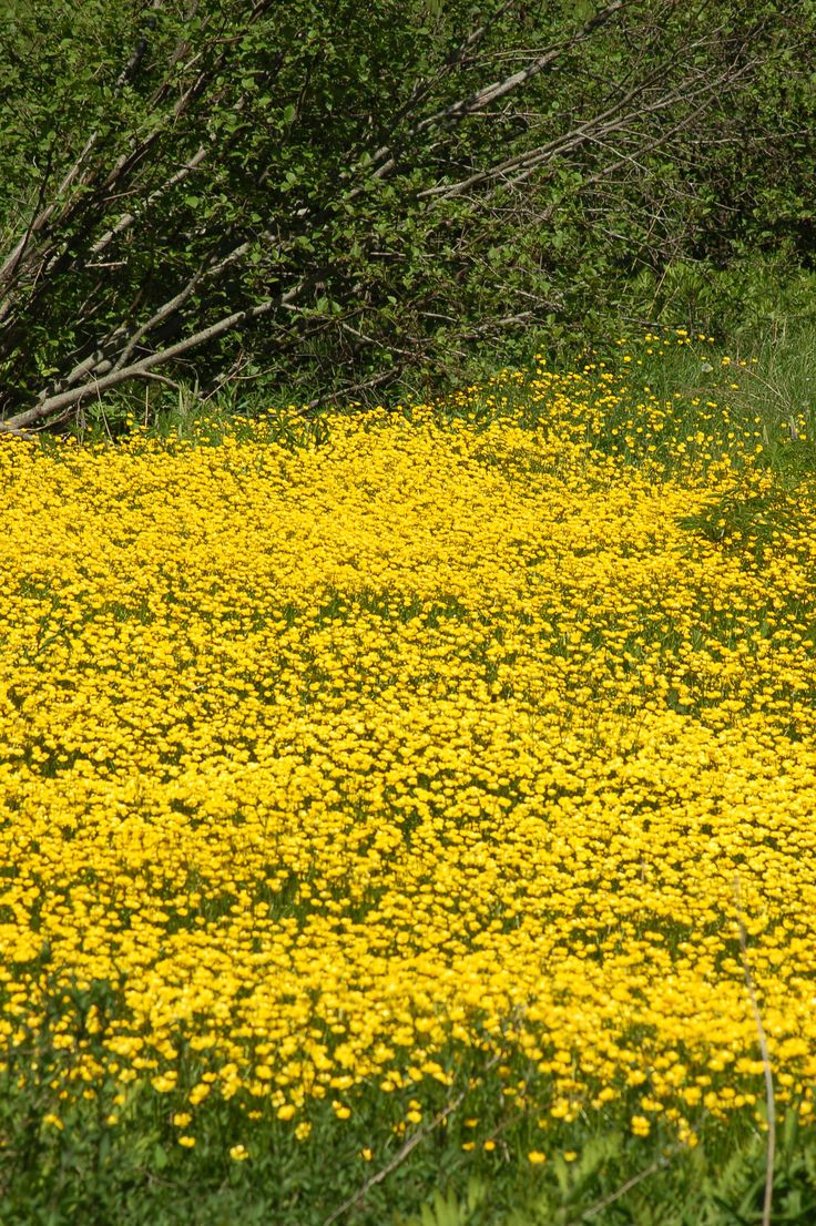 Pictures Of Garden Pathways And Walkways: Types Of Wildflowers Photo Guide
