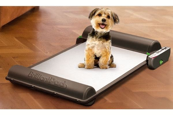 The world's first self-cleaning indoor dog potty. Ultra absorbent, eco-friendly pads refresh automatically to seal waste and lock away odor. BrilliantPad is hands-free for weeks at a time, then replacing pad roll is fast, easy and clean. Enjoy freedom and flexibility and improve health and hygiene.
