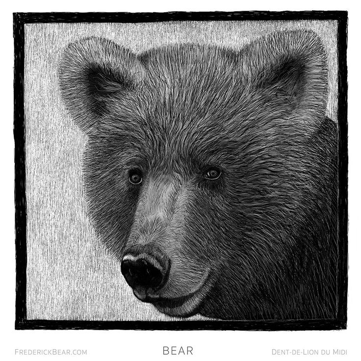 """This is """"Bear"""", a drop capital illustration from my new book """"Frederick Bear ~ A Tale of  Bern"""". Each of the ten chapters begins with a drop capital all drawn by hand on the iPad Pro with the Apple Pencil."""