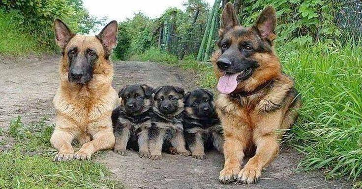 25 tökéletes családi fotó az állatvilágból… Nicsak, ki szereti legjobban a családját!