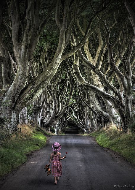 The Eerie Forest, photo by Dave Lally. These trees are known as the Dark Hedges and are located on the Bregagh Road, Armoy, County Antrim in Northern Ireland.