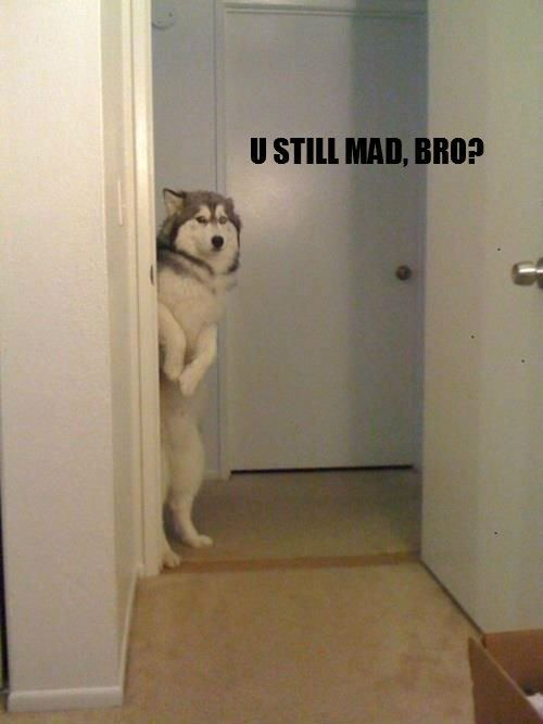 I love this! It totally looks like my pup and something he would do.