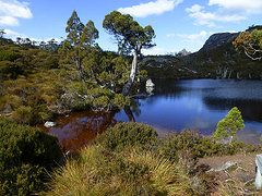 Featured Art - Wombat Tarn Cradle Mountain  by Sarah  King