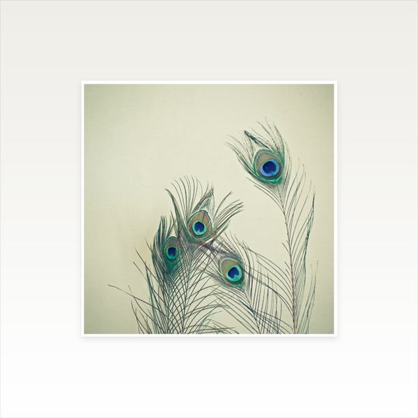 42 best this is it shop images on pinterest a3 art for Where can i buy peacock feathers craft store