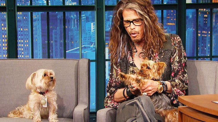 Aerosmith - Steven Tyler's Dogs Unexpectedly Crash His Interview And Steal The Show—This Is Hilarious!