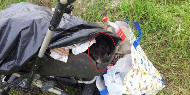 Brindisi: il cane senza vita dentro il passeggino per bambini