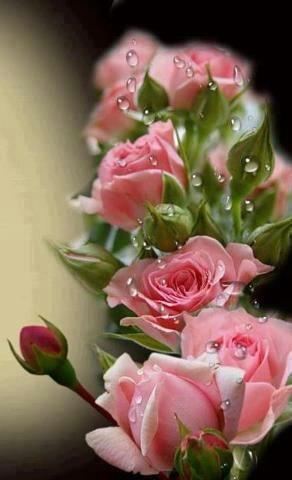 Rosas e Naturezas: Foto: