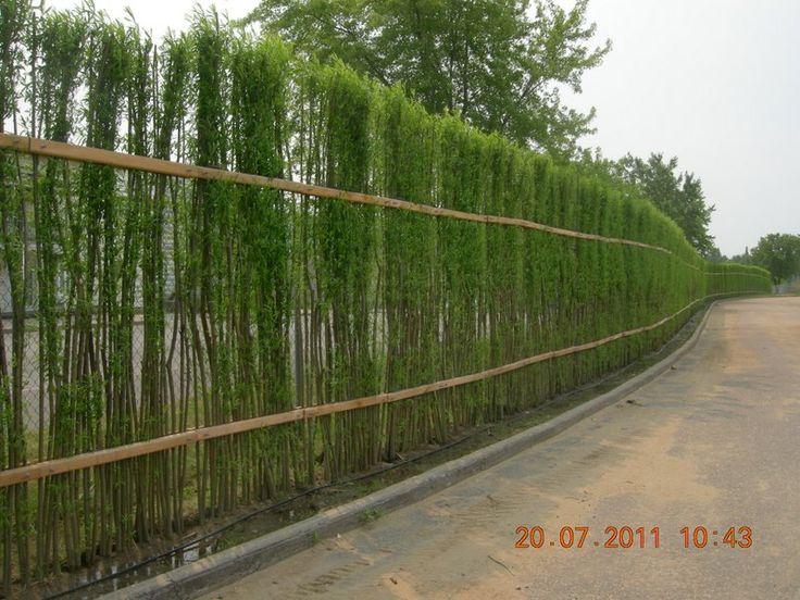 29 best living fence