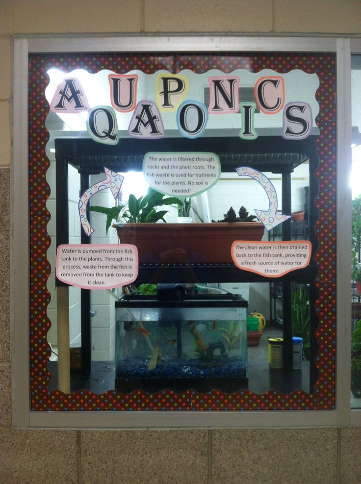 Small Scale Aquaponics System On Display At Marshall High