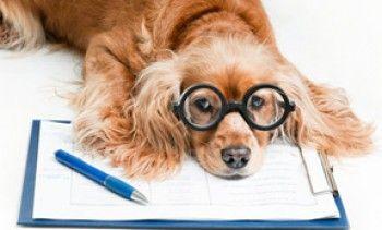 Setting SMART goals for your pet sitting business-via The PSI Blog http://www.petsit.com/blog @PetSittersIntl