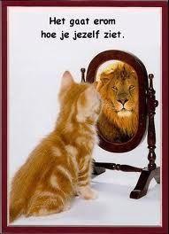 Zelfvertrouwen en arrogantie zijn twee totaal verschillende dingen - Plazilla.com