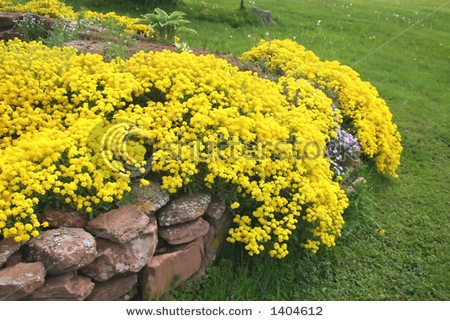 25 best Rock garden images on Pinterest | Gardening, Flower ...