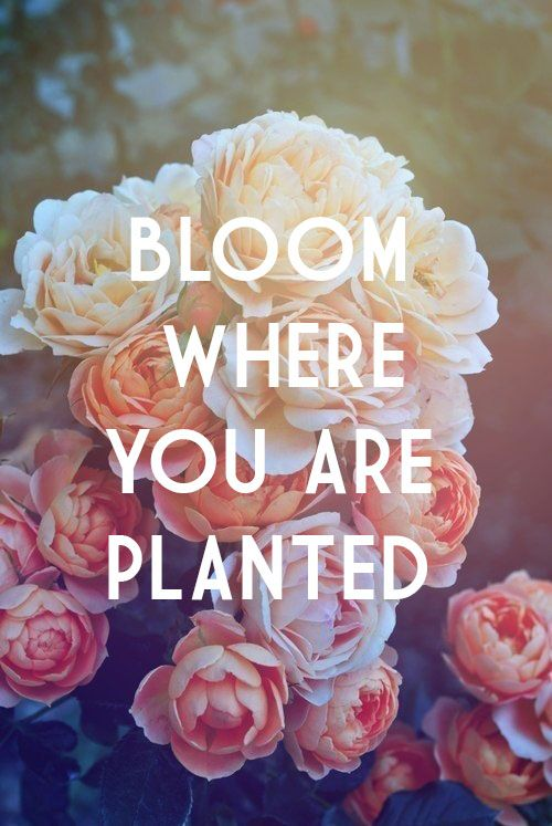 .bloom where you are planted