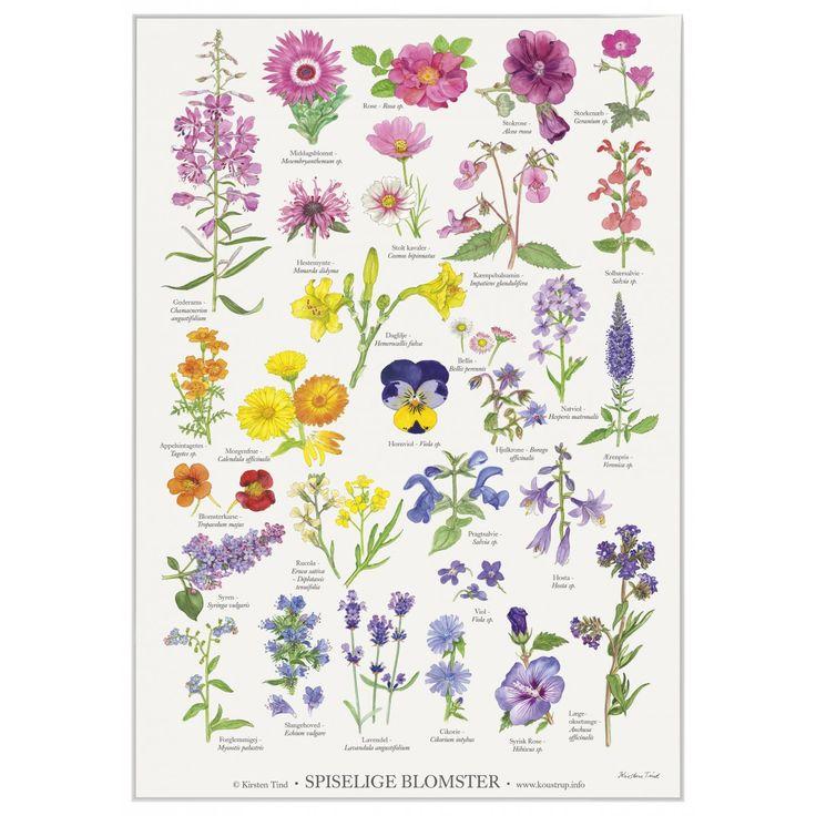 Spiselige blomster - Plakat A2- Kirsten Tind illustrationer. www.koustrupco.dk
