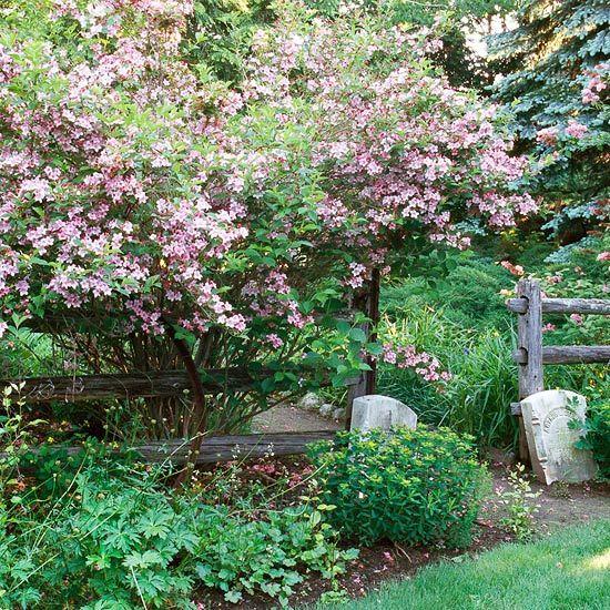 Best Flowering Shrubs For Hedges Gardening Pinterest Flowering