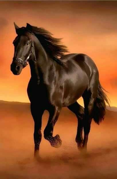 Beautiful horse.                                                                                                                                                                                 More