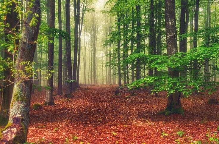 Na floresta em uma manhã enevoada